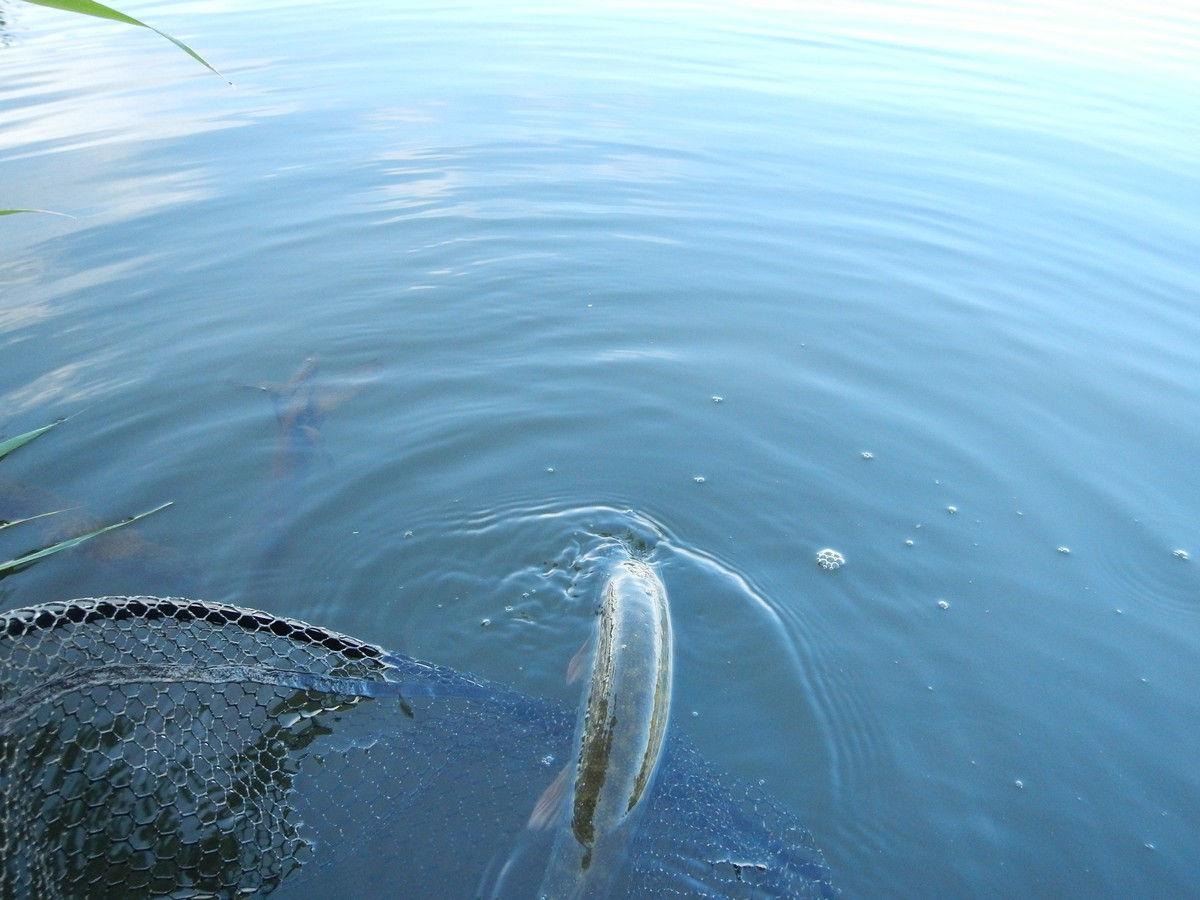 рыбалка с силиконовыми приманками