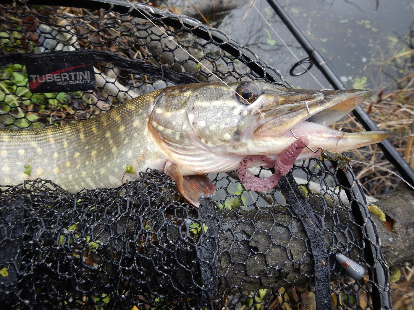 рыбалка в удмуртии где ловить