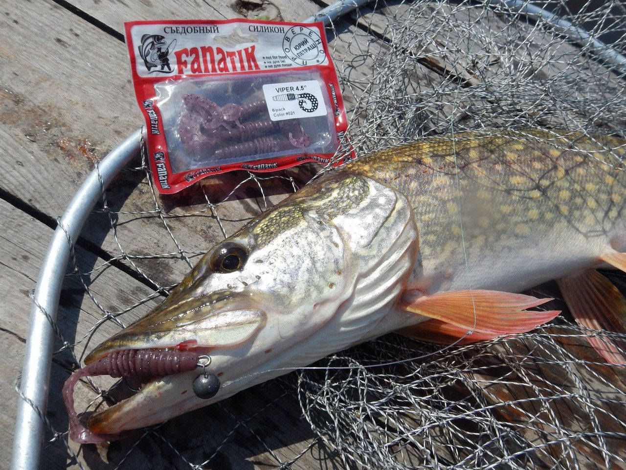 pike on silicon bait Viper 4.5-inch color 021
