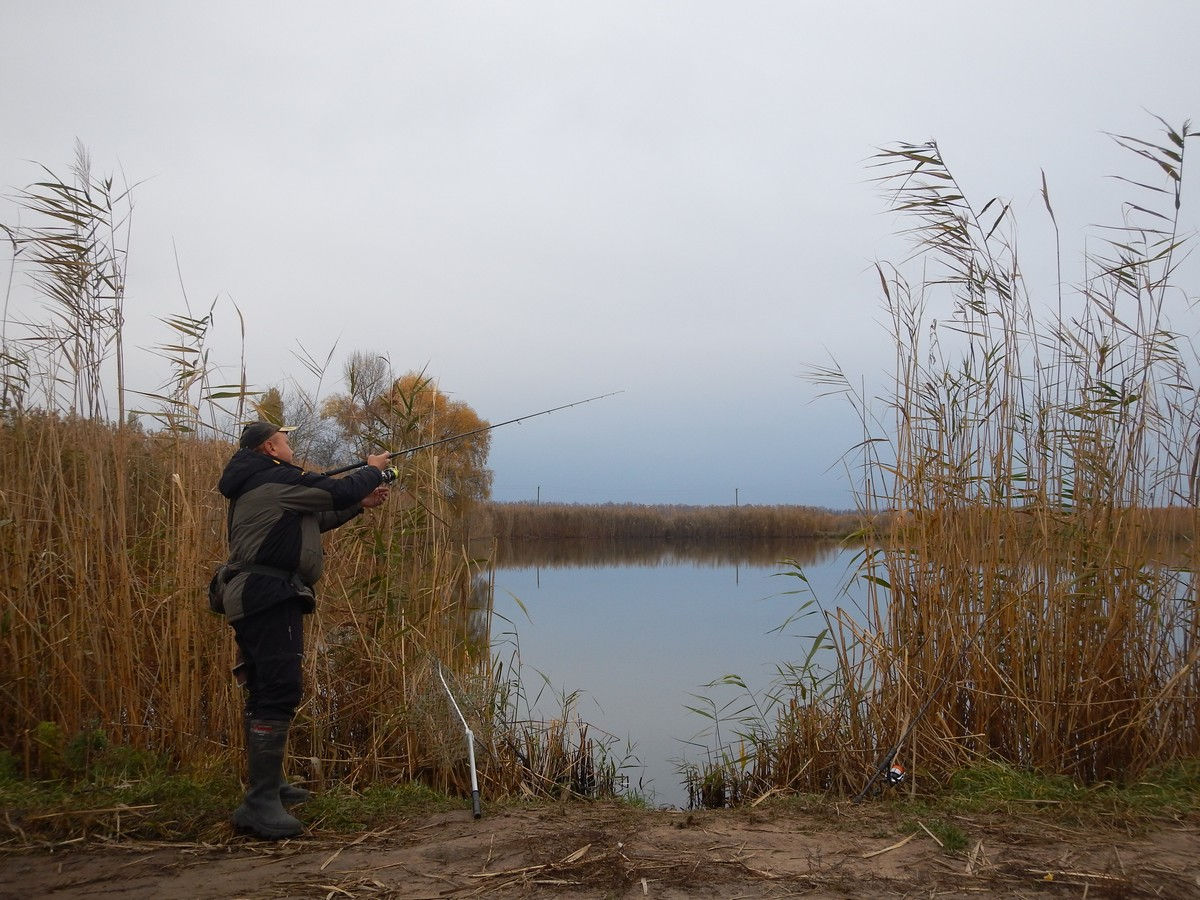 ловля щуки судака осенью